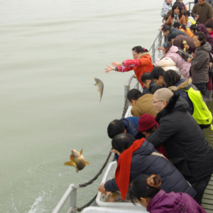 Buddhists freeing fish in southern China. (Photo: Dan Smyer Yu)