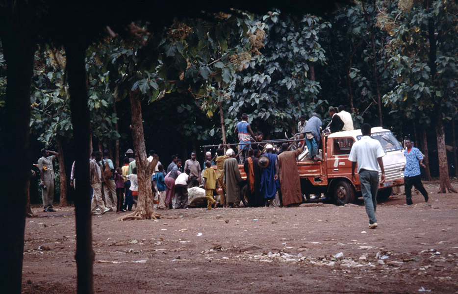 Unloading of cattle 2 (cattle market, Korhogo, Côte d'Ivoire). (Photo: Boris Nieswand)