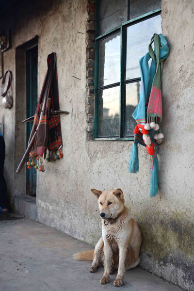 A village dog sits in front of a local home. A handcrafted bow and arrow used for hunting small game hangs on the wall in the background. (Photo: Naomi Hellmann)