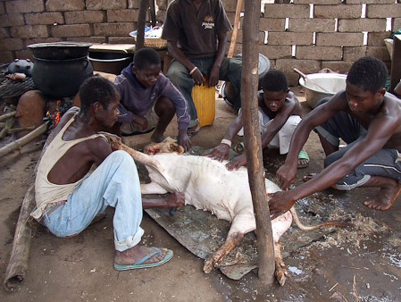 Deaf and hearing men slaughtering a goat. (Photo: Annelies Kusters)