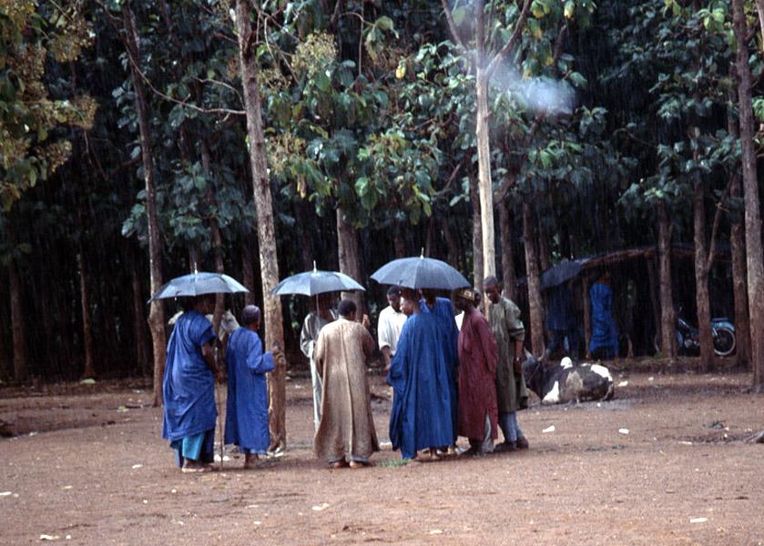 Negotiating cattle prices (Cattle Market, Korhogo, Côte d'Ivoire). (Photo: Boris Nieswand)