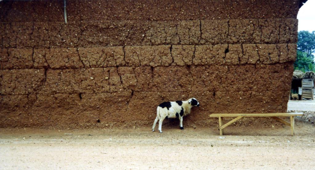 Sheep in front of a weather beaten mud wall (Dormaa District, Ghana).  (Photo: Boris Nieswand)