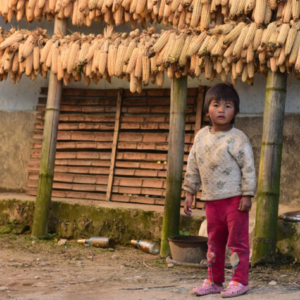 A young girl stands in front of rows of maize drying on bamboo poles in the late afternoon sun. (Photo: Naomi Hellmann)