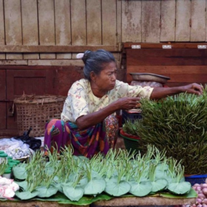 Orderly bundles of betel leaves, a versatile medicinal plant used to reduce heat in the body and fight ailments like colds, coughs, or excess swelling. Leaves can be boiled like with ginger and jaggery or used like a compress. (Photo: Naomi Hellmann)